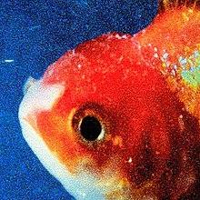 Vince-Staples-Big-Fish-Theory.jpeg